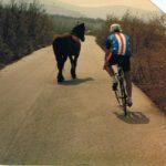 horst + pferd
